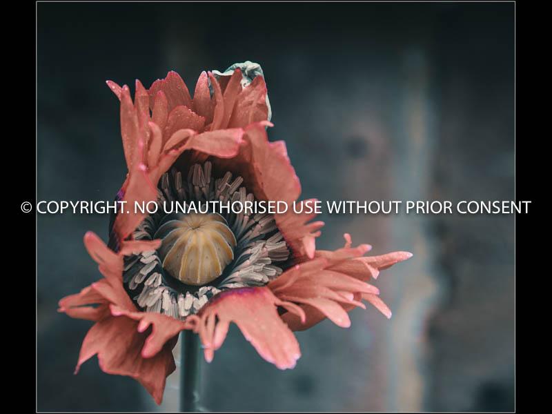 UNTITLED I by Hugh Robinson.jpg