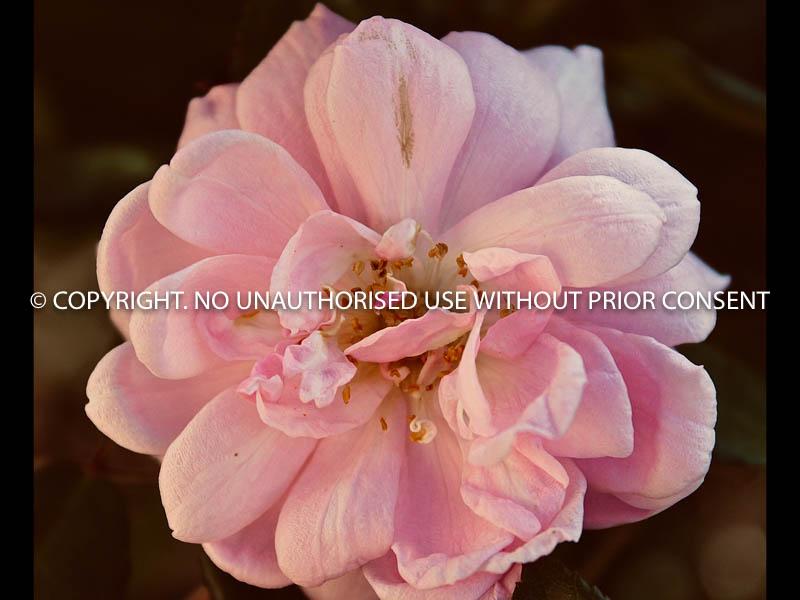 NO TITLE by Peter Westacott.jpg