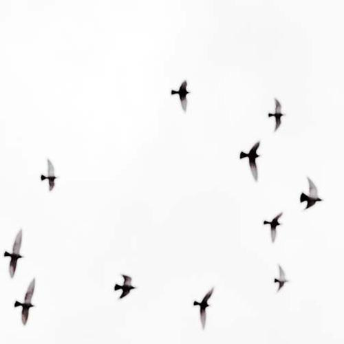 birdsinflight.jpg