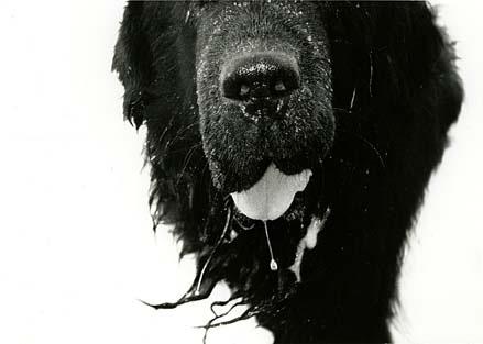 dogcloseup.jpg