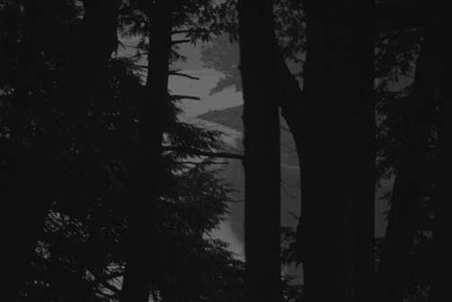 treesandriveratnight.jpg