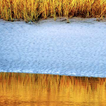 beachgrassreflection.jpg