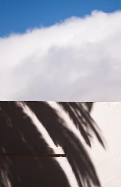 palm wall.jpg