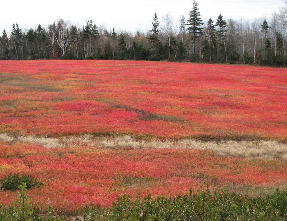 Field_Prince Edward Island.jpg