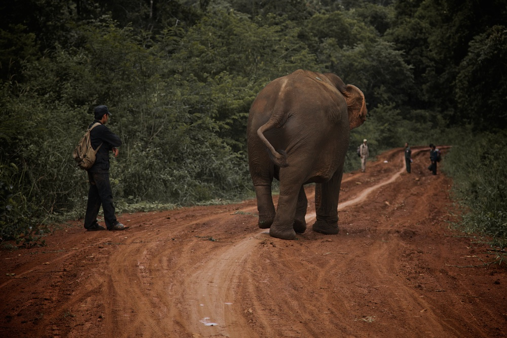 elephants_68.jpg