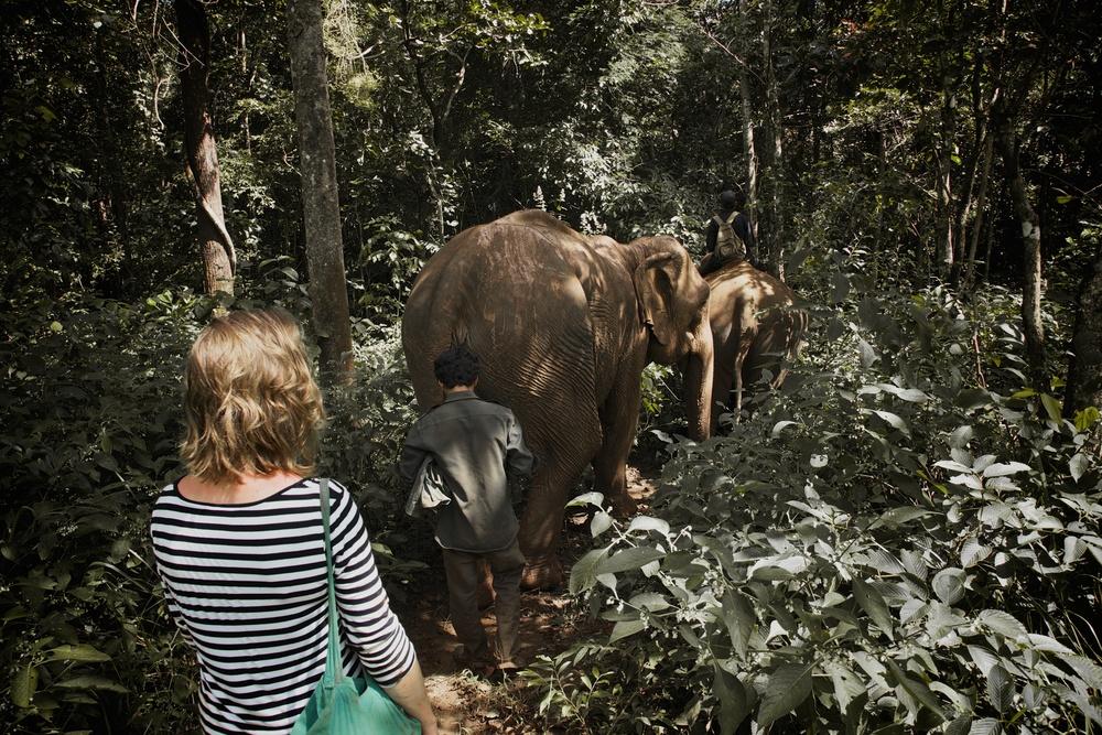 elephants_74.jpg