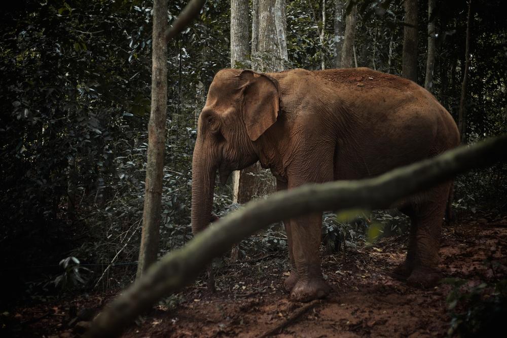 elephants_100.jpg