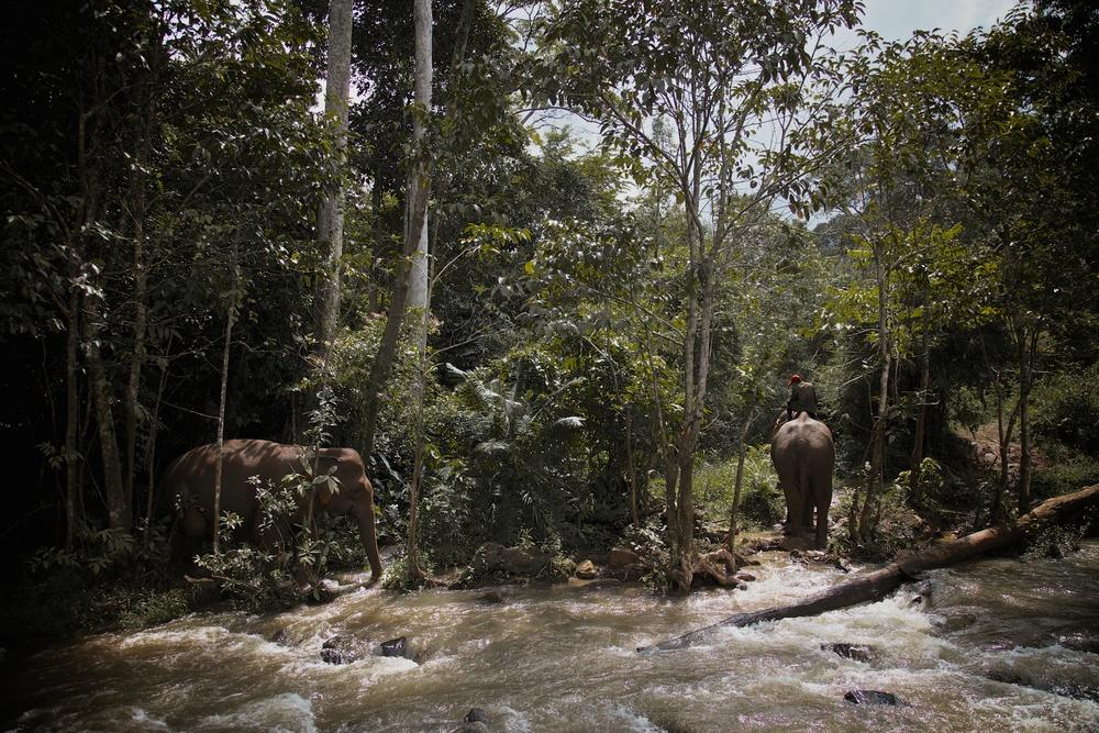 elephants_10.jpg