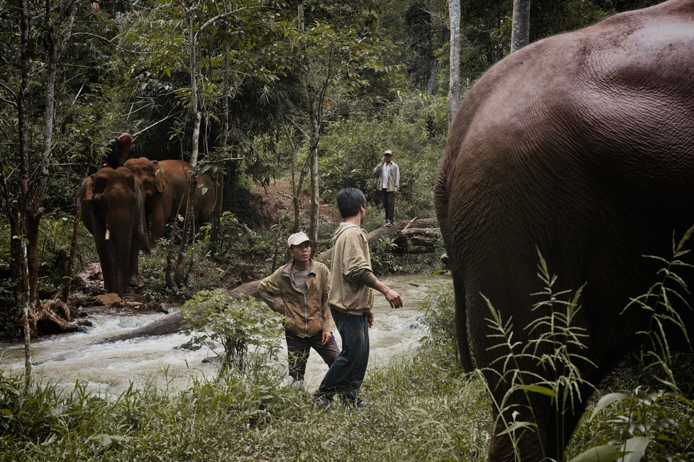 elephants_25.jpg