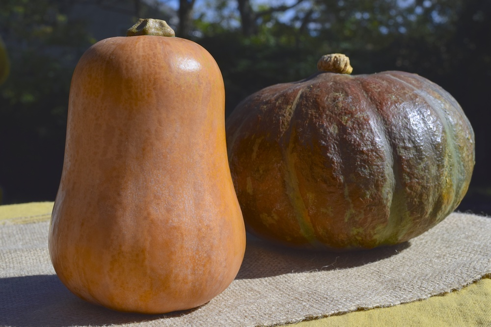 Honey Nut Squash (left) and Kabocha (on the right).