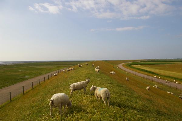 Texel_view_of_De_Schorren.jpg