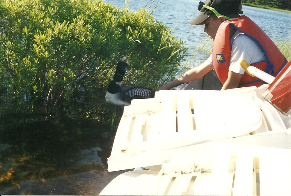 Myself petting a loon on an Algonquin trip while it calmly protects it's empty half made nest.