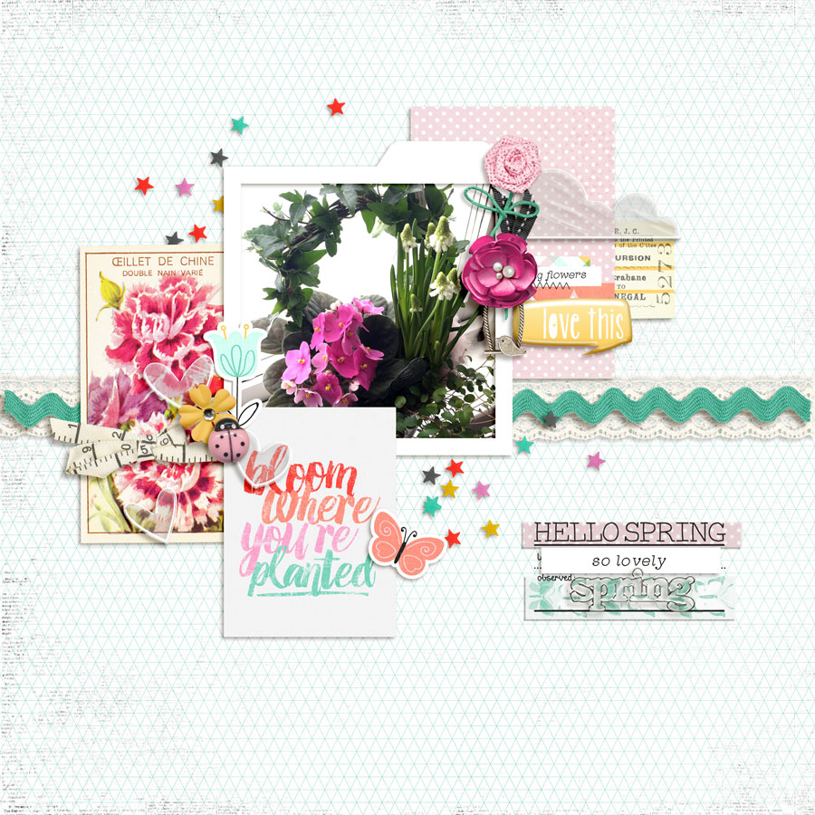 bloomandgrow-layout001-carinak.jpg
