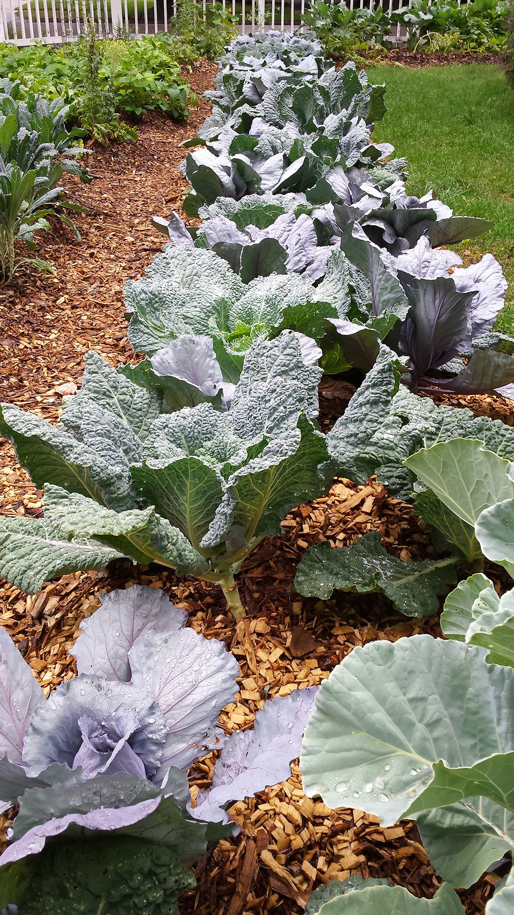 farming the neighborhood u2014 thrifty good life