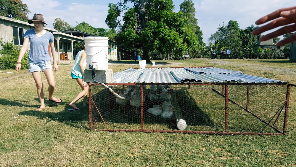Chicken tractors - raising their own meat birds.