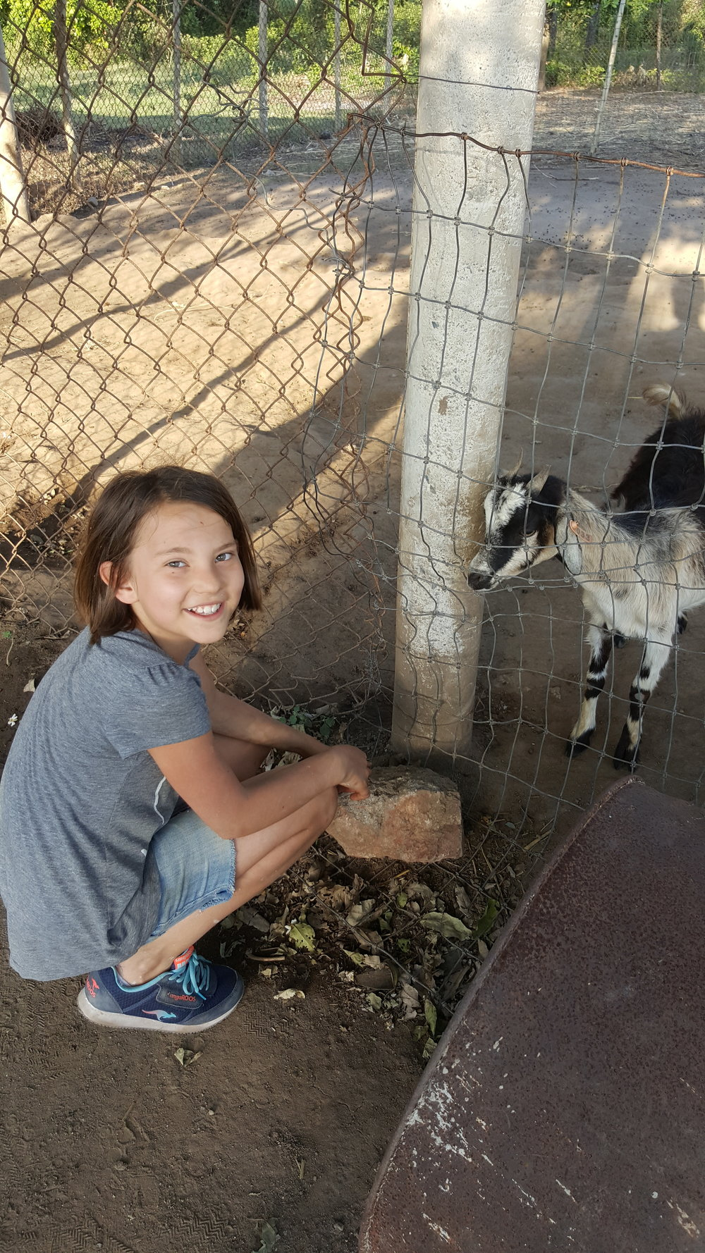 Gia in her happy place.  Goats, a kitty and a dog  -  all to herself!