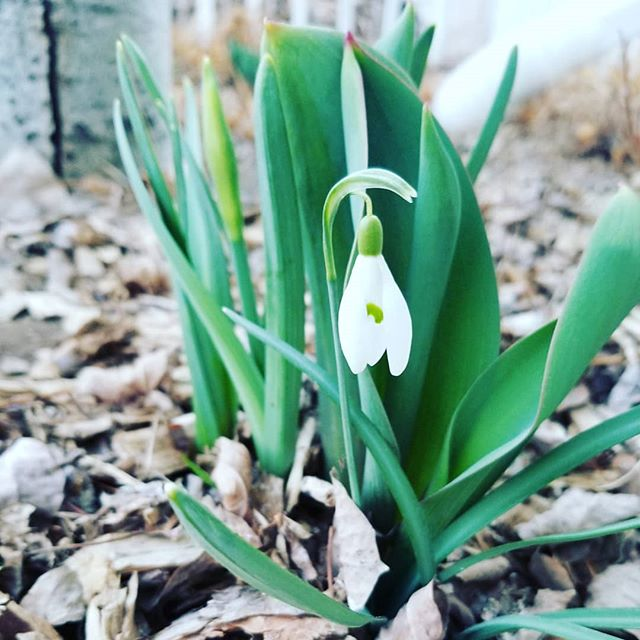 Happy Spring!! Such joy feasting my eyes on these little bits of green emerging through the brown.  Grateful for signs of life, and the promise of abundance. ♡