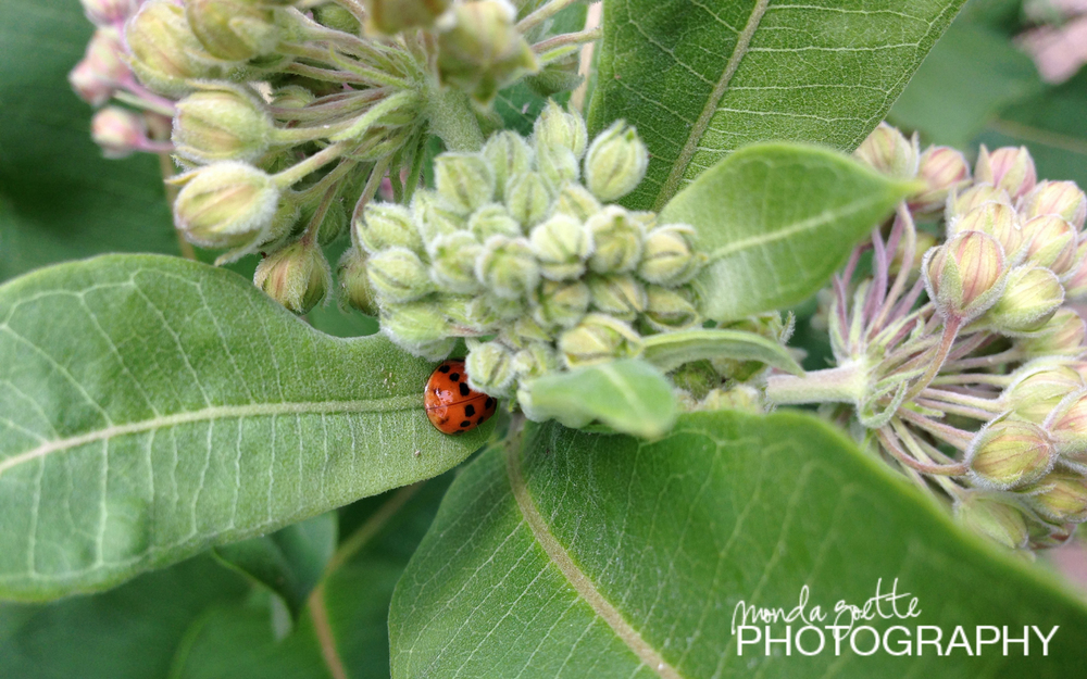 A ladybug nestled into the young blooms.