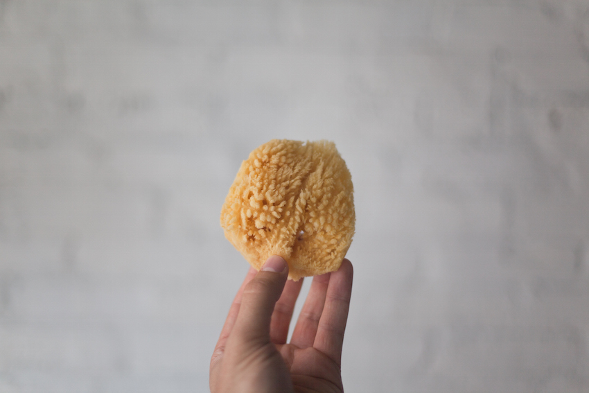 Michael-A-Muller—Sponges-12.jpg