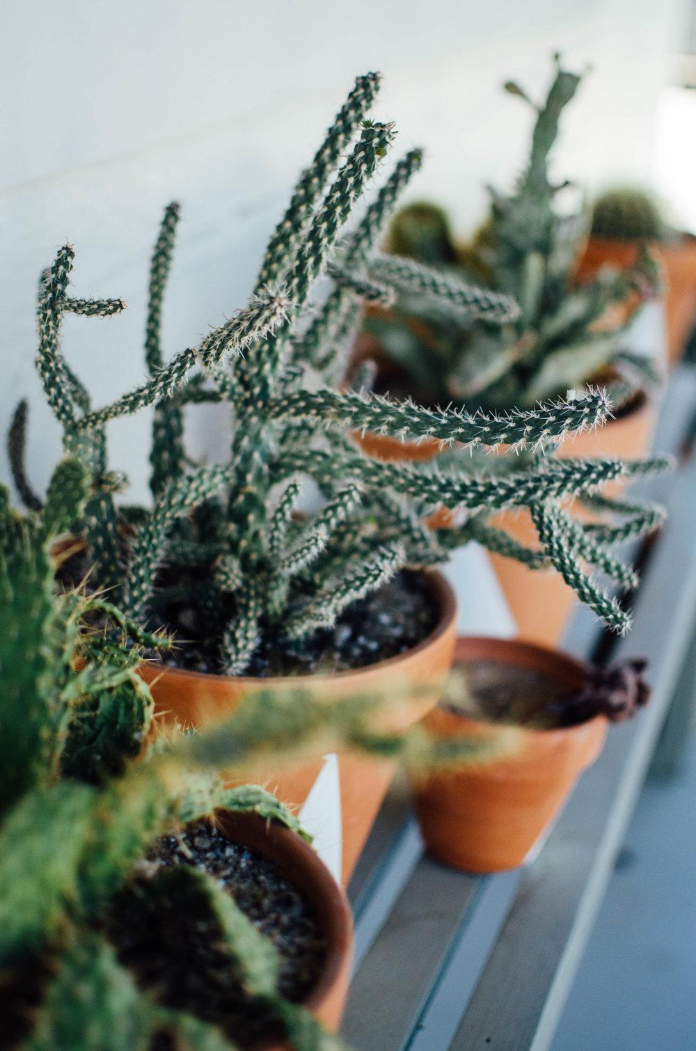 cabin cabin cabin joshua tree airbnb cactus