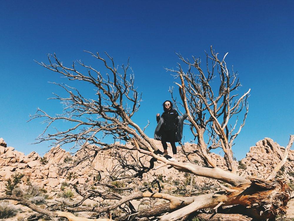 barker dam hike joshua tree