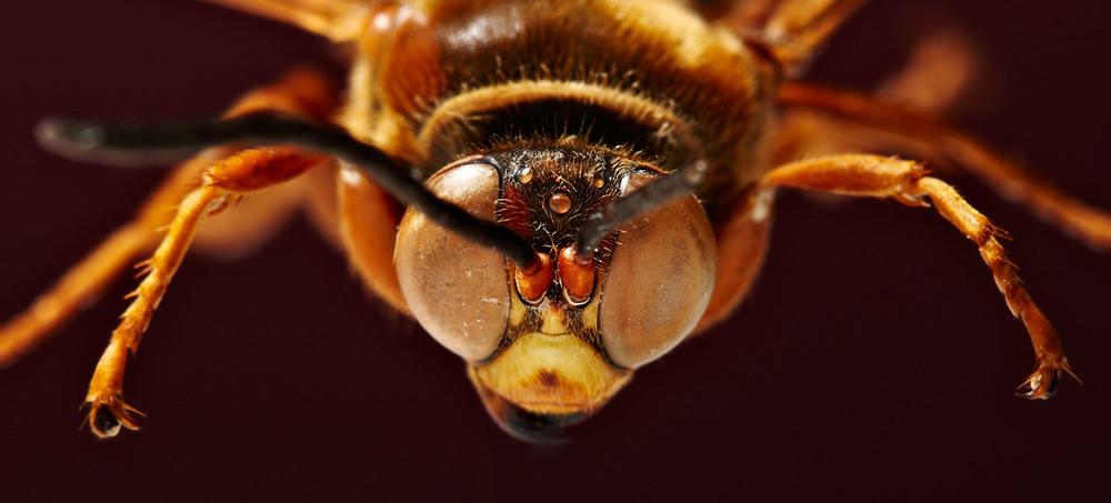 Wasp-2.jpg