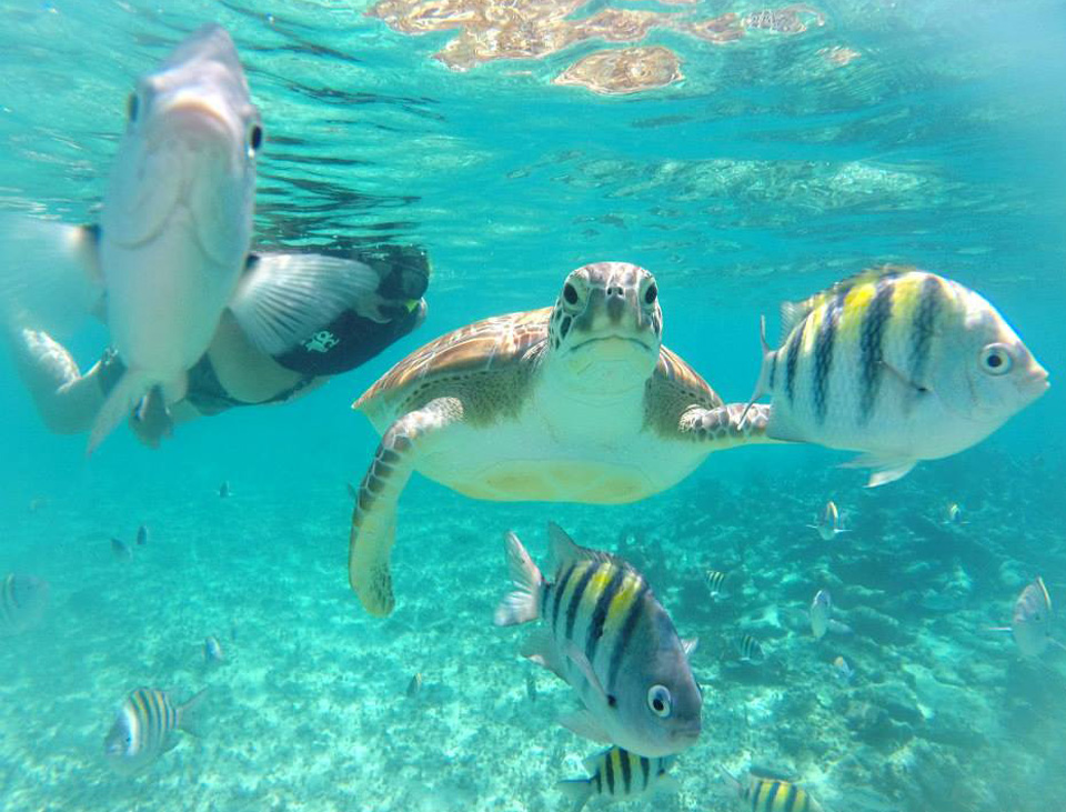 sea-turtles-snorkeling-playa-del-carmen.jpg