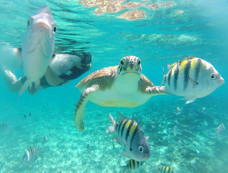 snorkeling-mayan-riviera-cancun.jpg