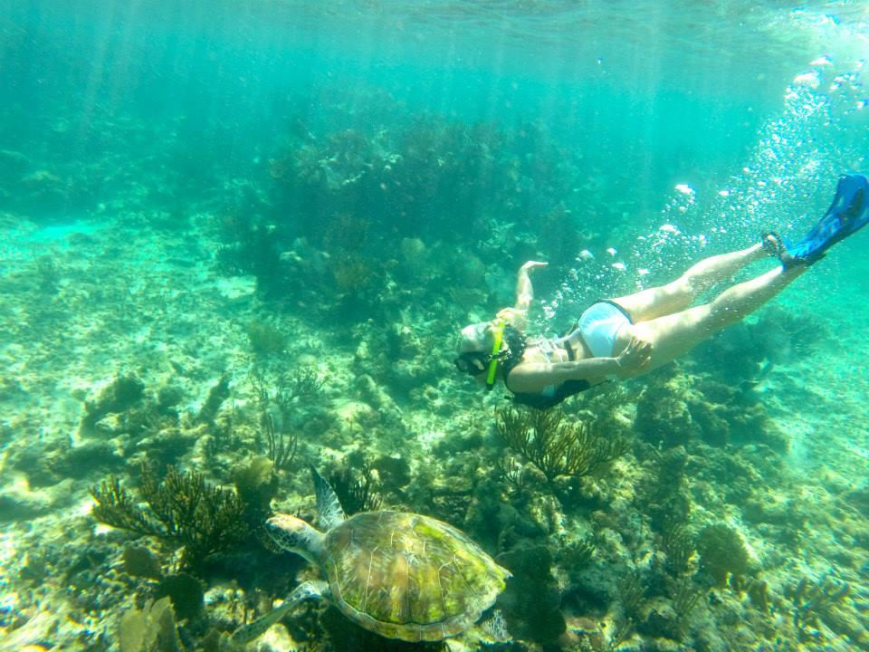 snorkeling-sea-turtle-mayan-riviera.jpg