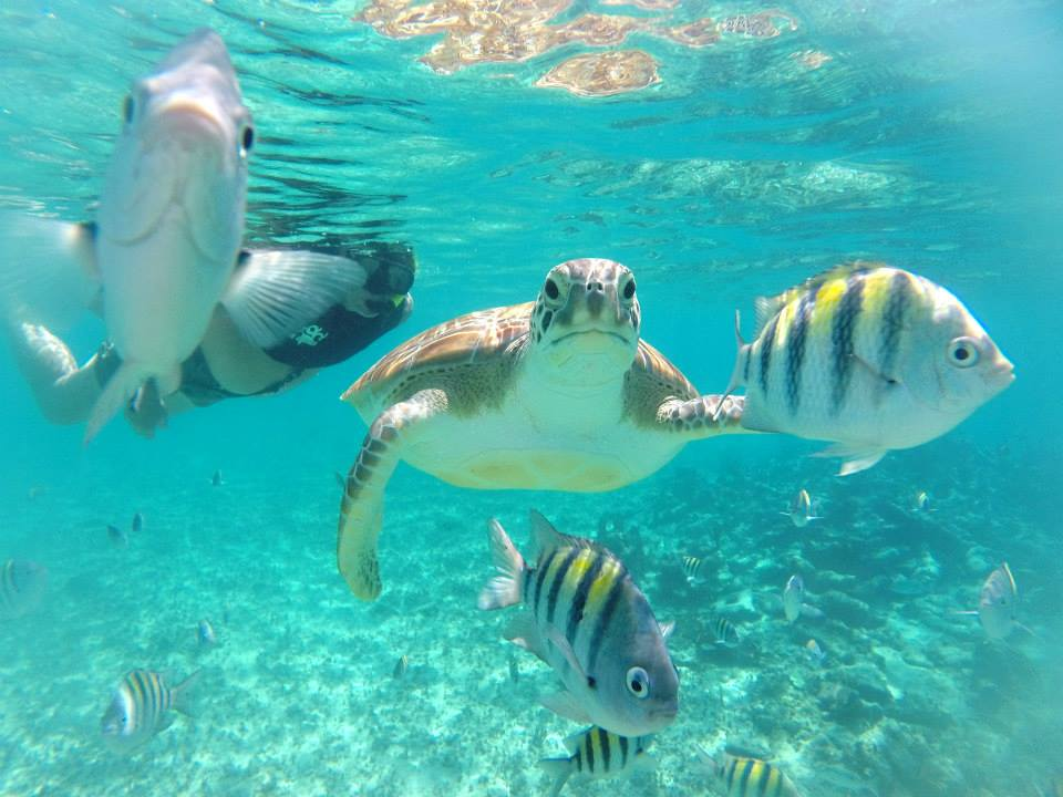 sea-turtle-playa-del-carmen-snorkel-boat-tour.jpg