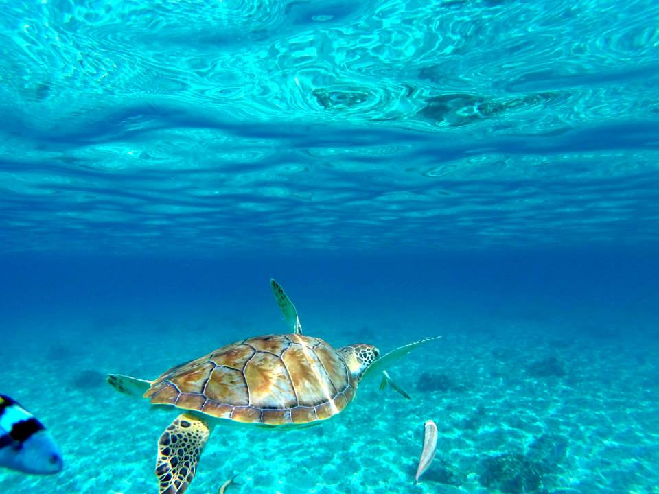 snorkeling-with-sea-turtles-mexico-mayan-riviera.jpg