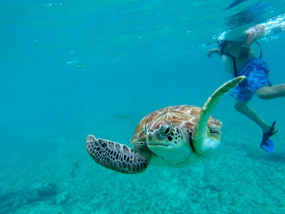 Click here to swim with sea turtles in the Mayan Riviera!