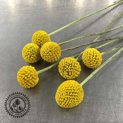 billy-balls.jpg