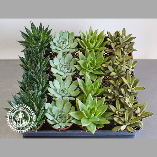 medium-succulent-tray-2.jpg