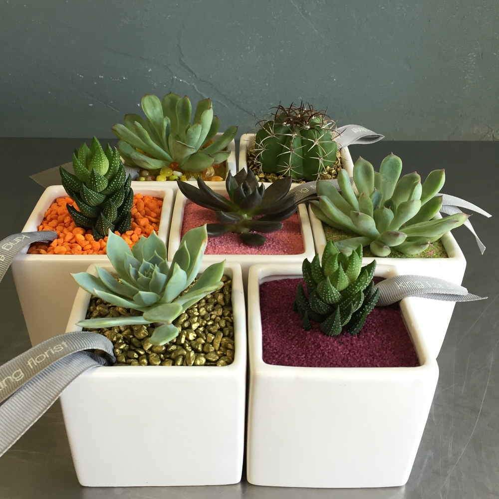 Desktop succulents