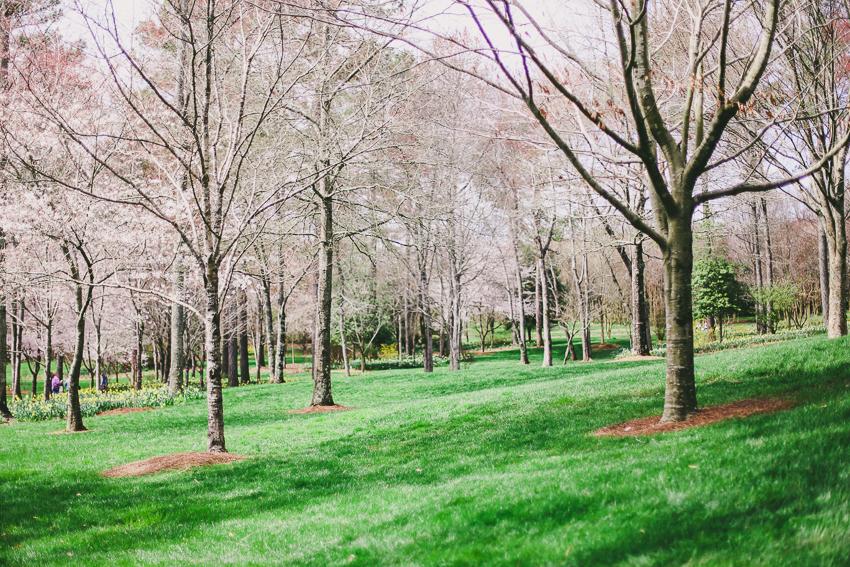 Gibb's Gardens-1