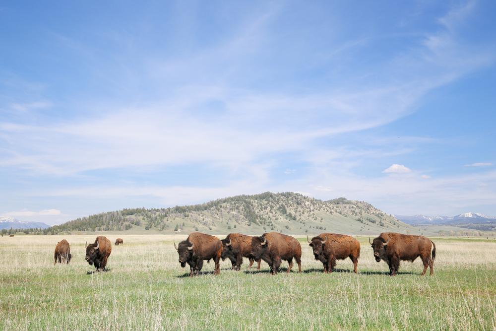 Wyoming-08.jpg