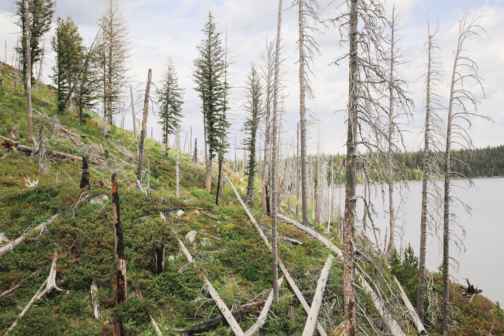 Wyoming-26.jpg