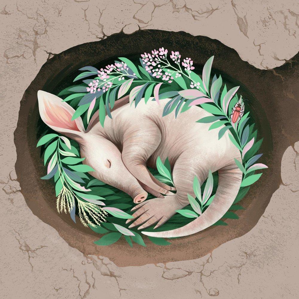 Sleepy_Aardvark.jpg