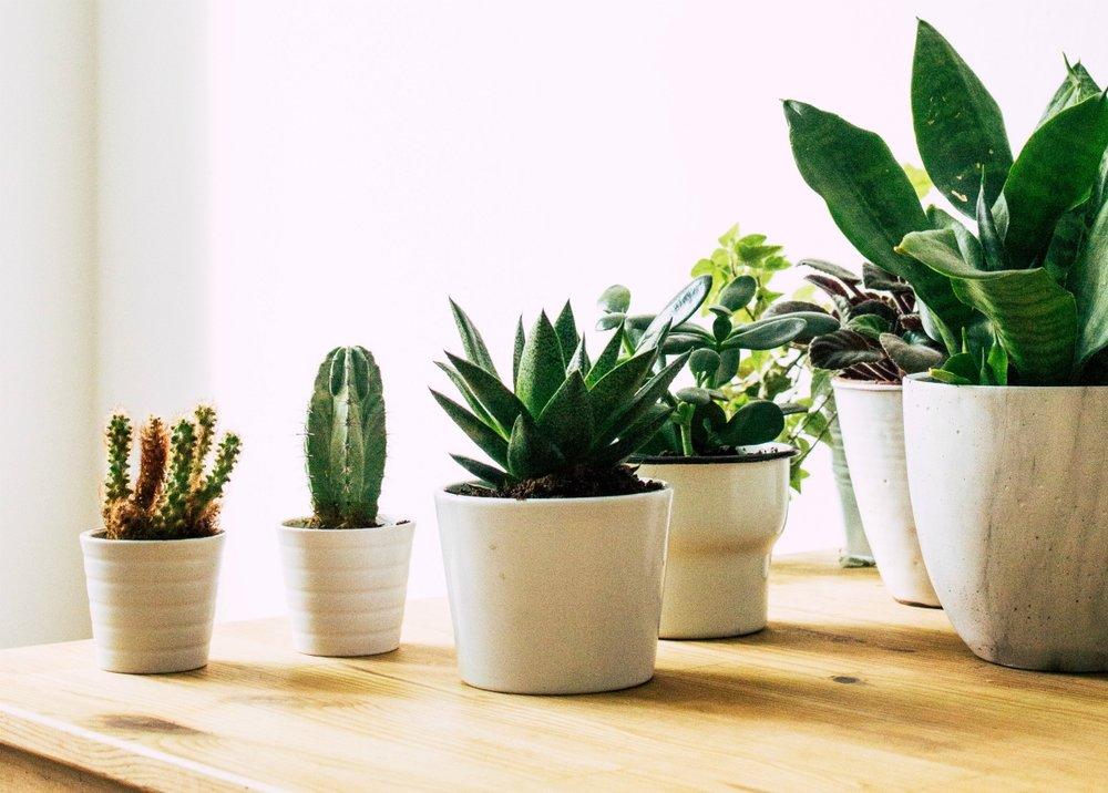 Plants as the first choice.jpg