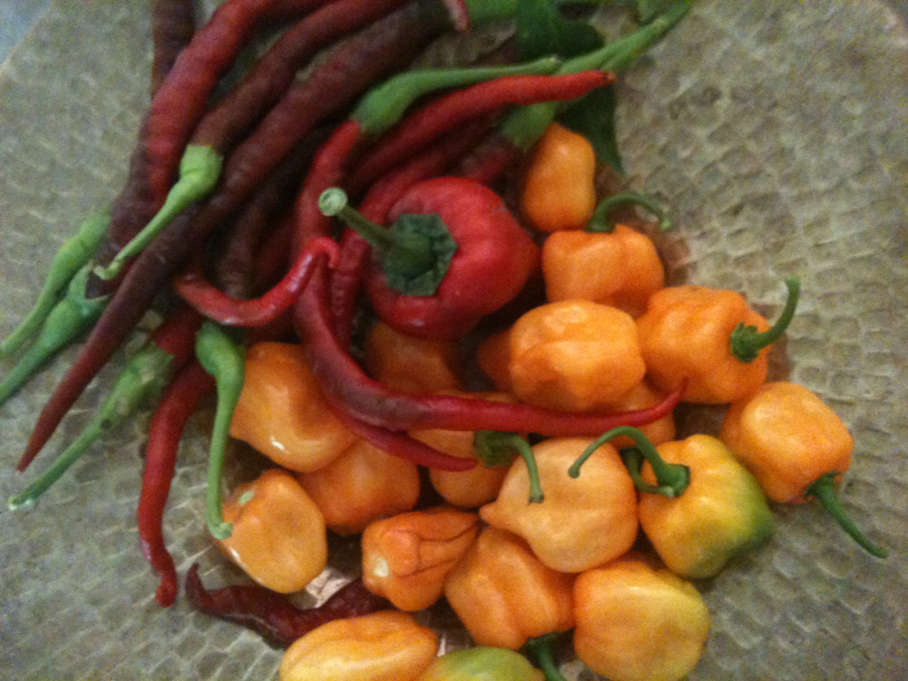Latest harvest from backyard.