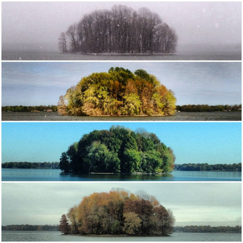 invisiblestories :      Living Planet  -   The Four Seasons of the Bush   (2013) (via  likeafieldmouse )