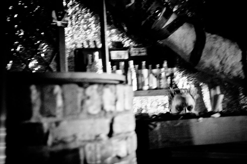 zum-schneider-nyc-2012-karneval-apocalyptika-3331.jpg