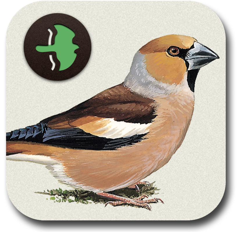 Birders Who Will Appreciate The Professional Ornithological Content In This App BI