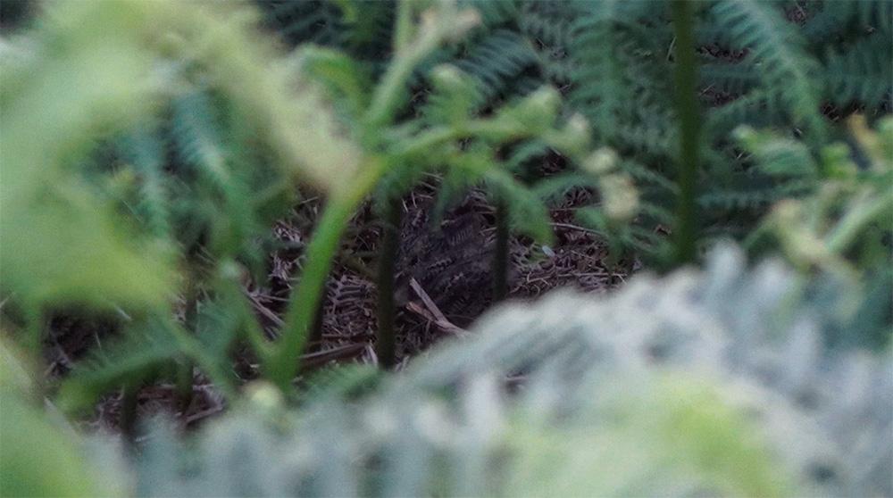 Spot the nest!