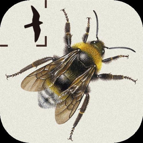 British & Irish Bumblebees