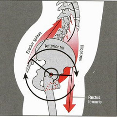 Anterior Pelvic Tilt and Lordosis