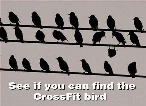 funny_crossfit_bird.jpg