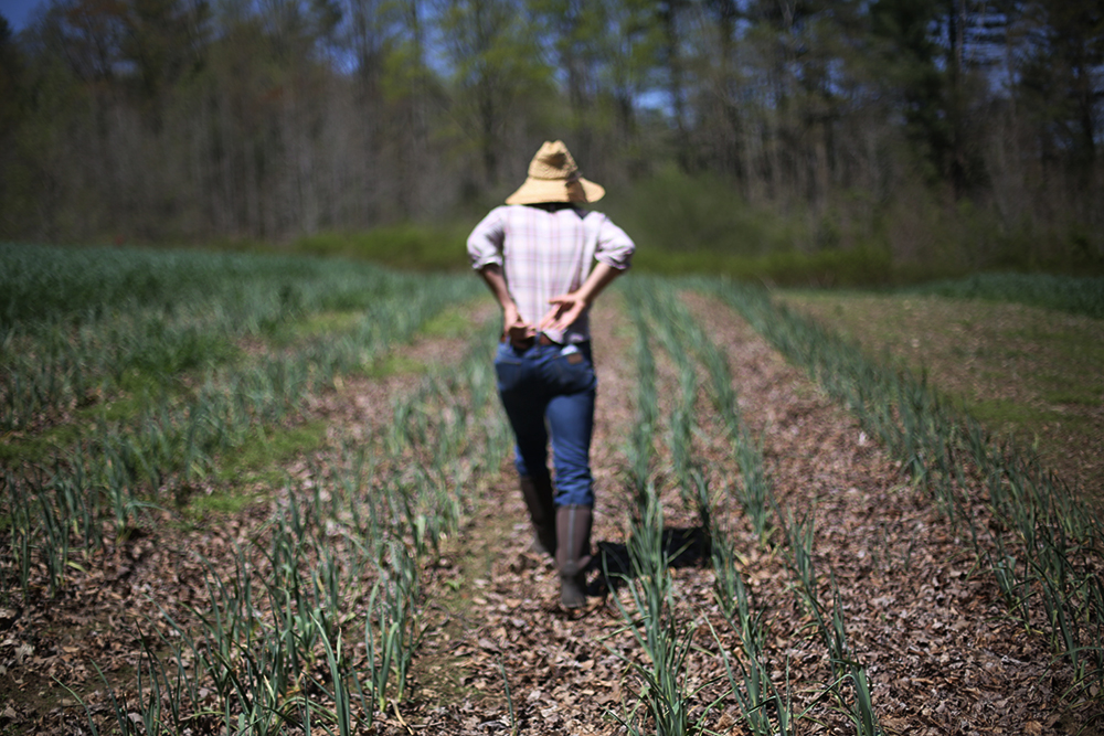 Scouting Spring Garlic at Canewater Appalachia