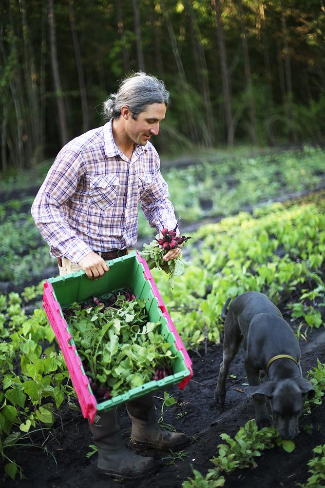 Radish Harvest with Waylon